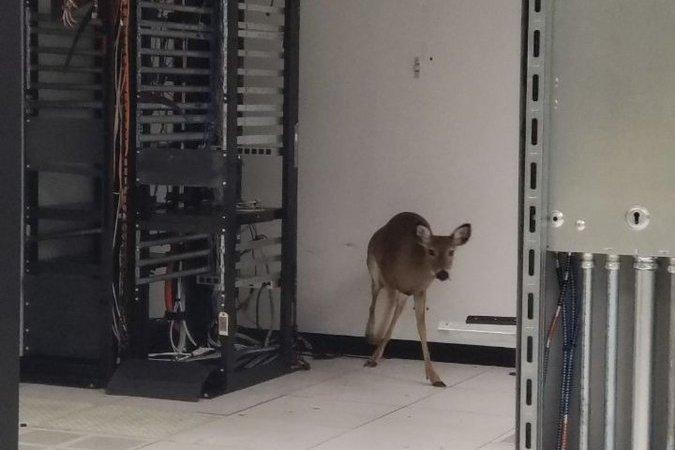 Deer in a data center