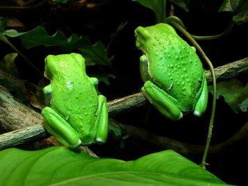 thinkstock photos green frog