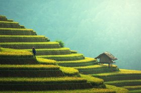 agriculture-asia-china-235648.jpg