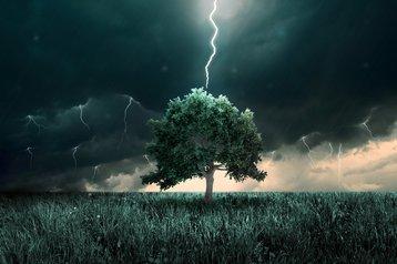 Lightning striking a tree