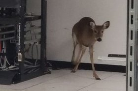 Deer in a data center